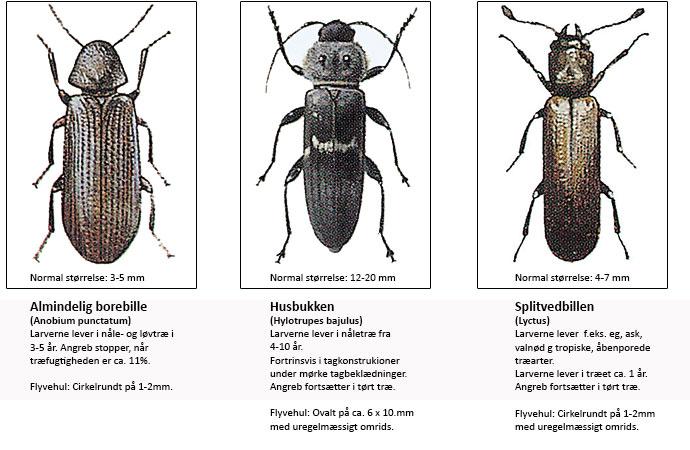 insekter i træ